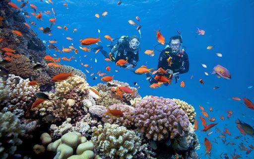 Du lịch Phú Quốc - Lặn ngắm san hô tại Quần Đảo An Thới