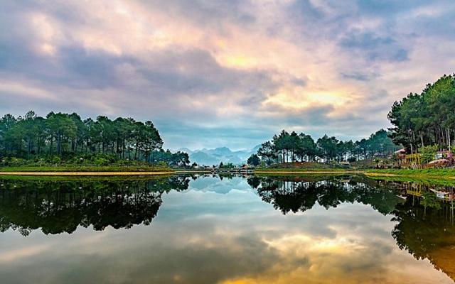 Rừng thông Bản Áng - Du lịch Mộc Châu